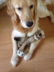 самые-милые-коты-9